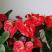 Květinová výzdoba interiéru